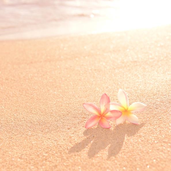 砂浜に並ぶ2つのプルメリアの画像